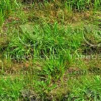 Grass 46