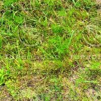 Grass 45