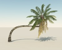 3d bent coconut tree