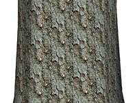 Tree bark 146
