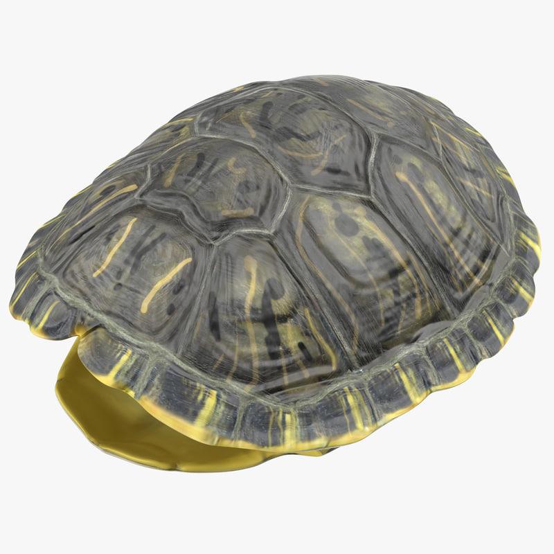Turtle Shell 3d model 00.jpg