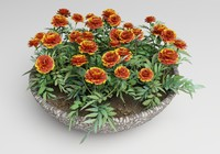 plants flower marigolds 3ds