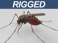3d model mosquito rigged animate