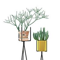 stapelia plants 3d model