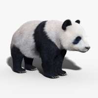 panda bear fur max