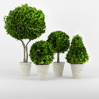 3d boxwood potted planters model