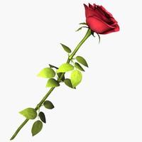 3dsmax red rose