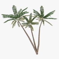 palm tree 3d model