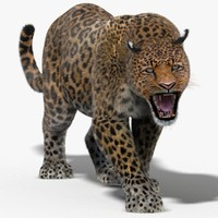 leopard fur cat animation 3d 3ds