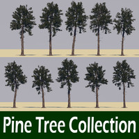 Loblolly pine tree collection