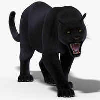3d max black panther fur cat