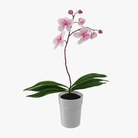 3d model orchid pot