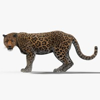 3d leopard fur cat animation