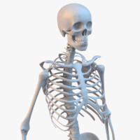 3d model of human skeleton
