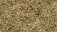 Dried Grass Texture