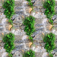 Stone wall with vine 16