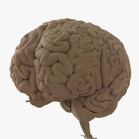 human brain ma