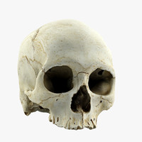 human skull 3ds