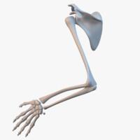 3d model hand skeleton