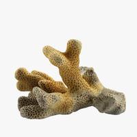 3d coral