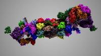 3d complete 26s 30s proteasome model
