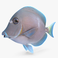 3ds blue tang