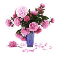 3d flowers model