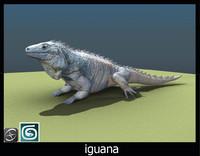 3d iguana