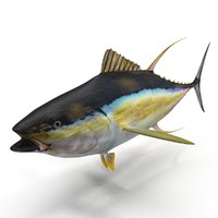 yellowfin tuna 3d model