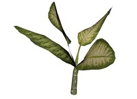 plant x 3d model