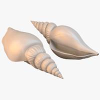 sea shell 3d x