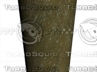 Tree Trunk Texture