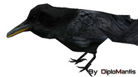 3d raven model