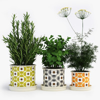 Kitchen Herbs In Orla Kiely Striped Petal Pots