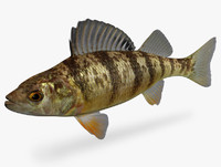 ma perca flavescens yellow perch