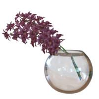 3d orchidaceae