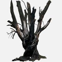 3d model of tree charred trunk willow