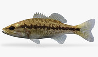3ds max micropterus punctulatus spotted bass