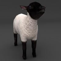 lamb black max