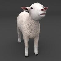maya lamb white