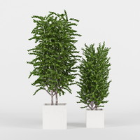 3ds max eucalyptus trees