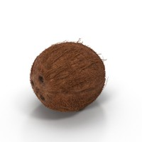3d model coconut fruit