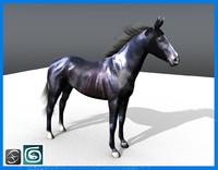 black stallion max