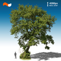 Cut Out Tree XL 1