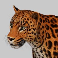 3d leopard