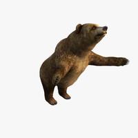 free bear 3d model