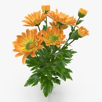 orange chrysanthemum 3d max