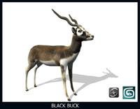 max black buck