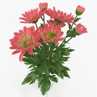 3d model pink chrysanthemum