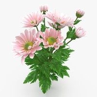 3d pink chrysanthemum model